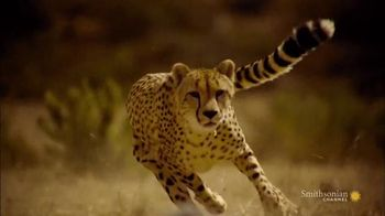 GEICO TV Spot, 'Smithsonian Channel: Speed Kills: Savannah' - 11 commercial airings