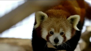Smithsonian National Zoo Conservation Biology Institute TV Spot, 'Future' - Thumbnail 4