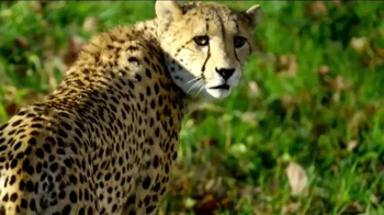 Smithsonian National Zoo Conservation Biology Institute TV Spot, 'Future' - Thumbnail 6