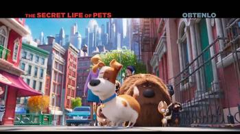 The Secret Life of Pets Home Entertainment TV Spot [Spanish] - Thumbnail 4