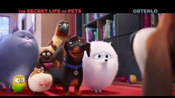 The Secret Life of Pets Home Entertainment TV Spot [Spanish] - Thumbnail 5