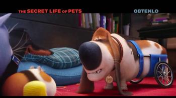 The Secret Life of Pets Home Entertainment TV Spot [Spanish] - Thumbnail 6