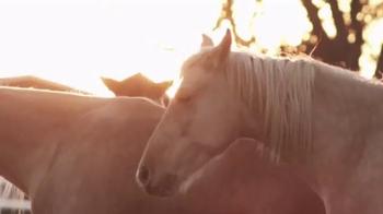 Pendleton Whisky TV Spot, 'Cowboy's Tools' - Thumbnail 1