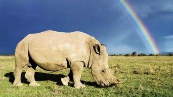 Saving Rhinos in the Wild thumbnail