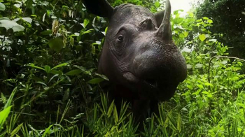 World Wildlife Fund TV Spot, 'Saving Rhinos in the Wild' - Thumbnail 7