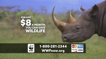 World Wildlife Fund TV Spot, 'Saving Rhinos in the Wild' - Thumbnail 8