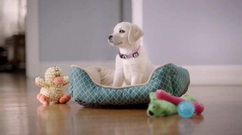 Meijer TV Spot, 'More for Happy Pets' - Thumbnail 5