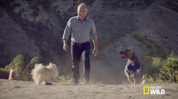 Subaru TV Spot, 'Nat Geo WILD: Make a Dog's Day' Featuring Cesar Millan - 70 commercial airings