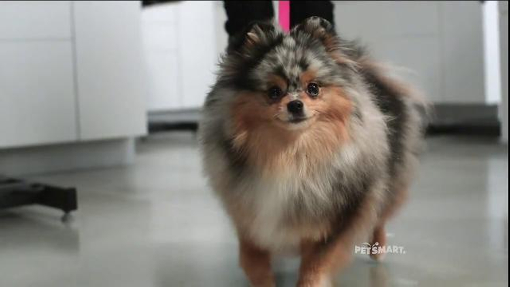 pomeranian groomer near me petsmart grooming tv commercial baby they re worth it 8253