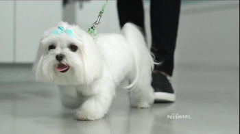 PetSmart Grooming TV Spot, 'Baby, They're Worth It' Song by Fifth Harmony - Thumbnail 9