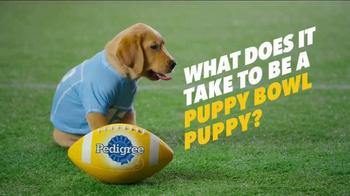 Pedigree Puppy TV Spot, 'Puppy Bowl Tryouts No. 1: Dedication' - Thumbnail 1