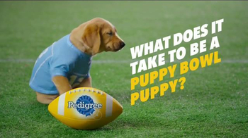 Pedigree Puppy TV Spot, 'Puppy Bowl Tryouts No. 1: Dedication' - Thumbnail 2