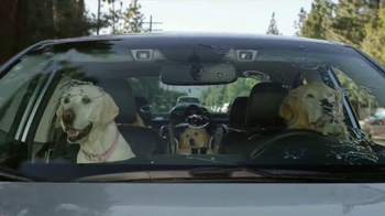 Subaru TV Spot, \'Dog Tested: Windshield Wiper\'