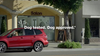 Subaru TV Spot, 'Dog Tested: Bad Hair Day' - Thumbnail 8