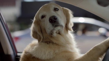 Subaru TV Spot, 'Dog Tested: Bad Hair Day' - Thumbnail 4