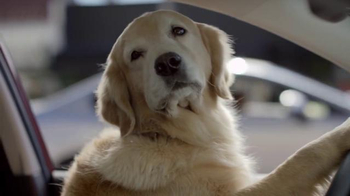Subaru TV Spot, 'Dog Tested: Bad Hair Day' - Thumbnail 5