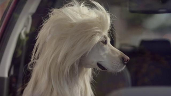 Subaru TV Spot, 'Dog Tested: Bad Hair Day' - Thumbnail 6