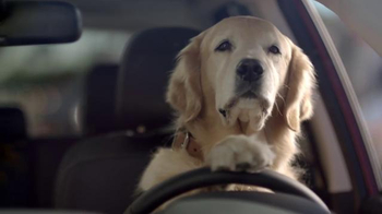 Subaru TV Spot, 'Dog Tested: Bad Hair Day' - Thumbnail 7