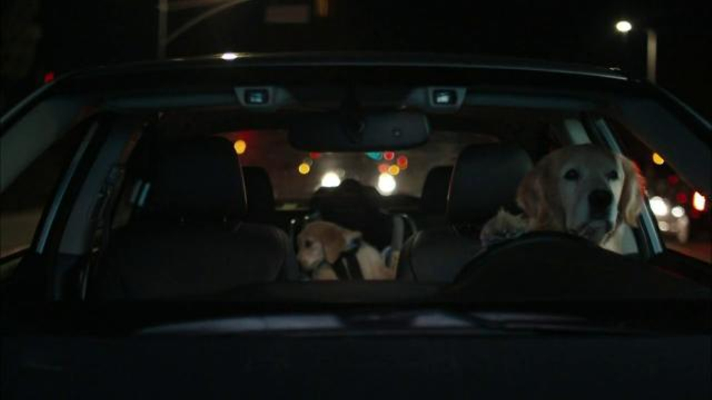Nissan Commercial Song >> Subaru TV Commercial, 'Dog Tested: Puppy' - iSpot.tv