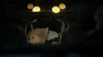 Subaru TV Spot, 'Dog Tested: Puppy' - Thumbnail 5