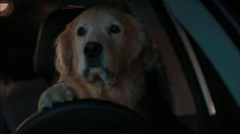 Subaru: Dog Tested: Puppy