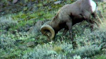 Trijicon AccuPoint TV Spot, 'Sheep Hunter'