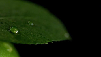 CÎROC Apple TV Spot, 'Introducing CIROC Apple' Song by Al Green - Thumbnail 2