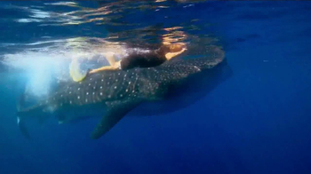 WildAid TV Spot, 'Whale Sharks' Featuring Sir Richard Branson - Thumbnail 2