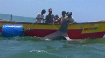 WildAid TV Spot, 'Whale Sharks' Featuring Sir Richard Branson - Thumbnail 3