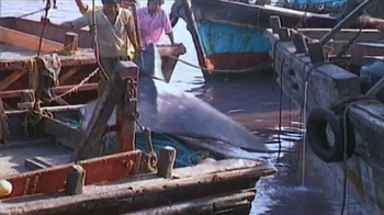 WildAid TV Spot, 'Whale Sharks' Featuring Sir Richard Branson - Thumbnail 4