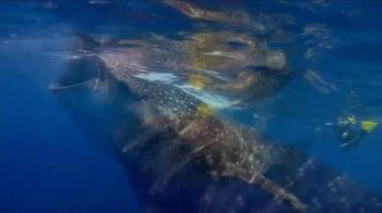 WildAid TV Spot, 'Whale Sharks' Featuring Sir Richard Branson - Thumbnail 5