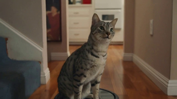 GoDaddy Super Bowl 2017 Teaser, 'Roomba Cats' - Thumbnail 5