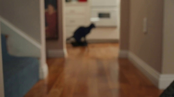 GoDaddy Super Bowl 2017 Teaser, 'Roomba Cats' - Thumbnail 6