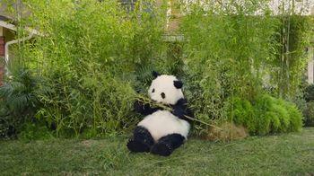 Super Bowl 2017 Teaser: Sneezing Panda thumbnail