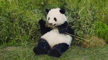 GoDaddy Super Bowl 2017 Teaser, 'Sneezing Panda' - Thumbnail 1