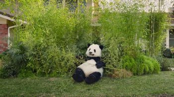 GoDaddy Super Bowl 2017 Teaser, 'Sneezing Panda' - Thumbnail 3