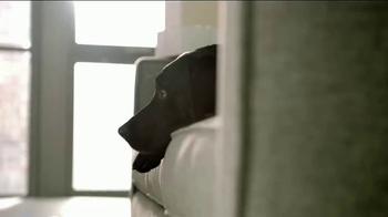 Bissell SpotBot Pet TV Spot, 'Black Labs: Antibacterial' - Thumbnail 1