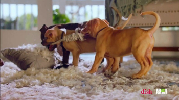 Dish Network Remote Finder TV Spot, 'Animal Planet: Puppy Bowl Sunday' - Thumbnail 3