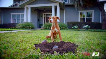 Dish Network Remote Finder TV Spot, 'Animal Planet: Puppy Bowl Sunday'