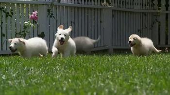 American Kennel Club TV Spot, 'Responsible Breeders' - Thumbnail 1