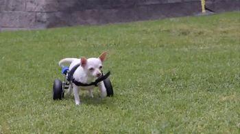 2016 Honda CR-V LX TV Spot, 'Dogs With Wheels' - Thumbnail 9