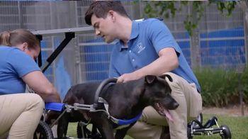2016 Honda CR-V LX TV Spot, 'Dogs With Wheels' - Thumbnail 4