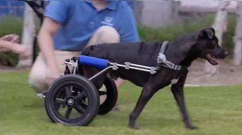 2016 Honda CR-V LX TV Spot, 'Dogs With Wheels' - Thumbnail 5
