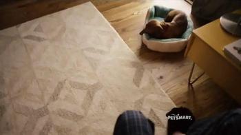 PetSmart TV Spot, 'Dachshund Lover' Song by Queen - Thumbnail 1
