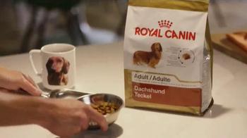 PetSmart TV Spot, 'Dachshund Lover' Song by Queen - Thumbnail 3