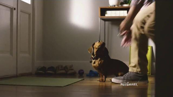 PetSmart TV Spot, 'Dachshund Lover' Song by Queen - Thumbnail 5