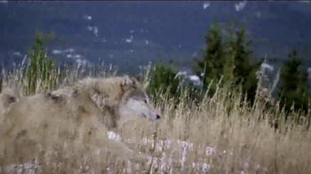 Blue Buffalo BLUE Wilderness TV Spot, 'Wolf Dreams: Savings' - Thumbnail 2