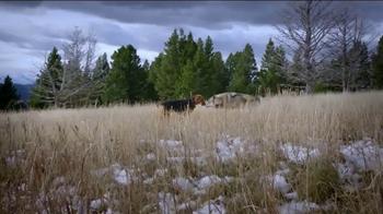 Blue Buffalo BLUE Wilderness TV Spot, 'Wolf Dreams: Savings' - Thumbnail 4