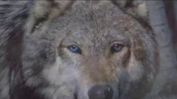 Blue Buffalo BLUE Wilderness TV Spot, 'Wolf Dreams: Savings' - Thumbnail 5