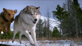 Blue Buffalo BLUE Wilderness  TV Spot, 'Wolf Dreams: Wild Rolls' - Thumbnail 3